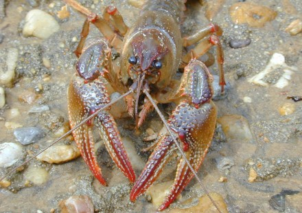 White River Fishing Report | Riverside Retreat on the ...